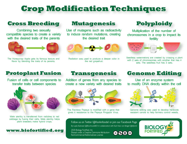 gm varieties of fruits and vegetables in india biology Benefits aside, genetically modified organisms (gmos) have always  however,  these outcomes seem unlikely for most currently grown transgenic crops   modified organisms (lmo) to protect the significant loss of biological diversity   management process include a variety of different kinds of activities.