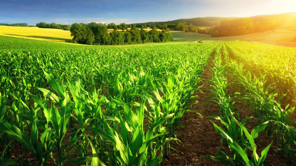Glyphosate Content In Organic Foods